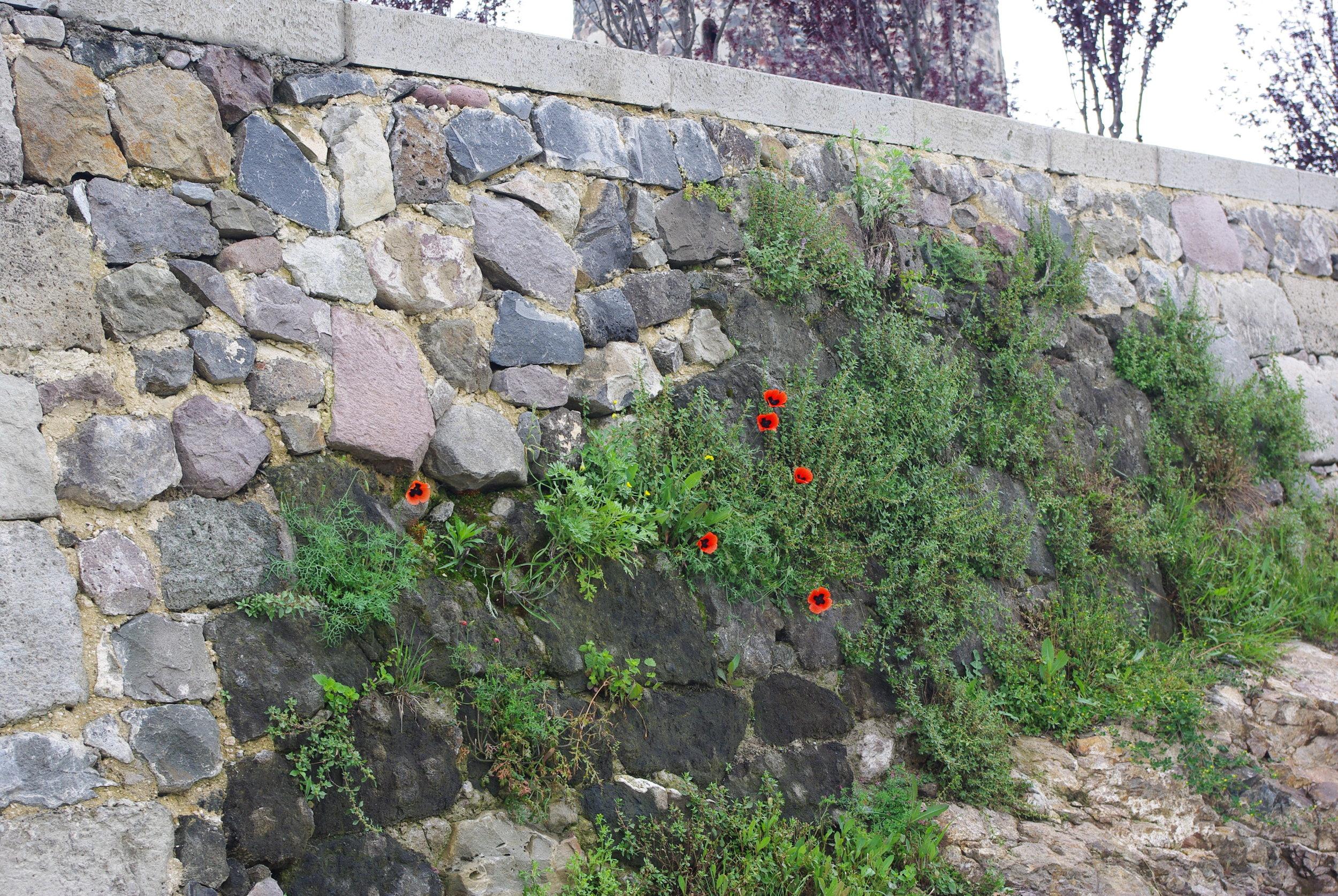 1206 Рабати Тбилиси ЮраIMGP0024.JPG