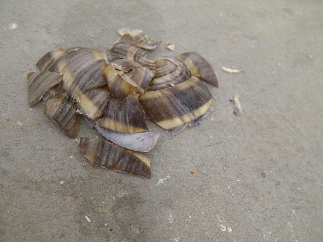 Mollusc, Mucus, Member, Much