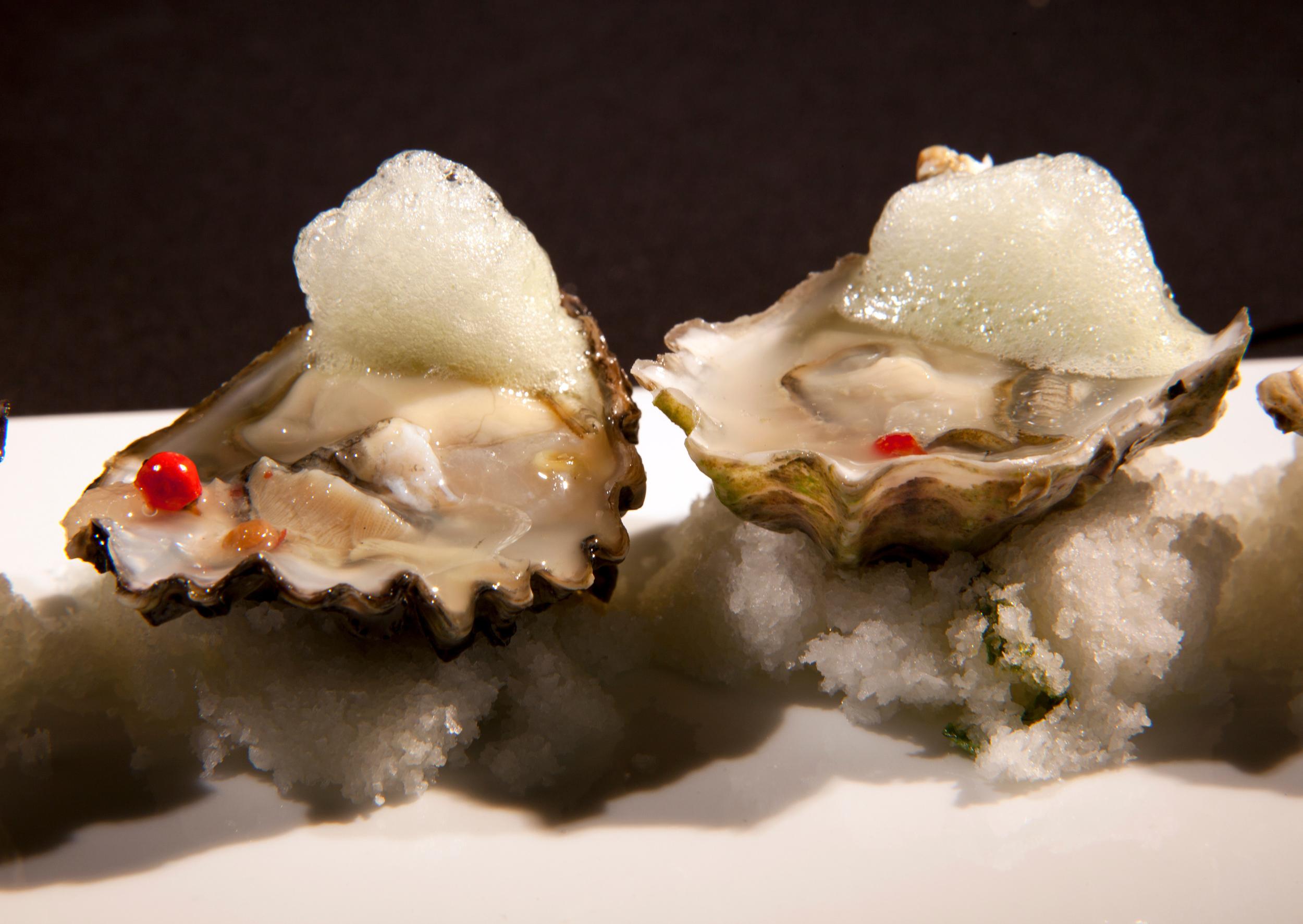 h5o_oysters.jpg