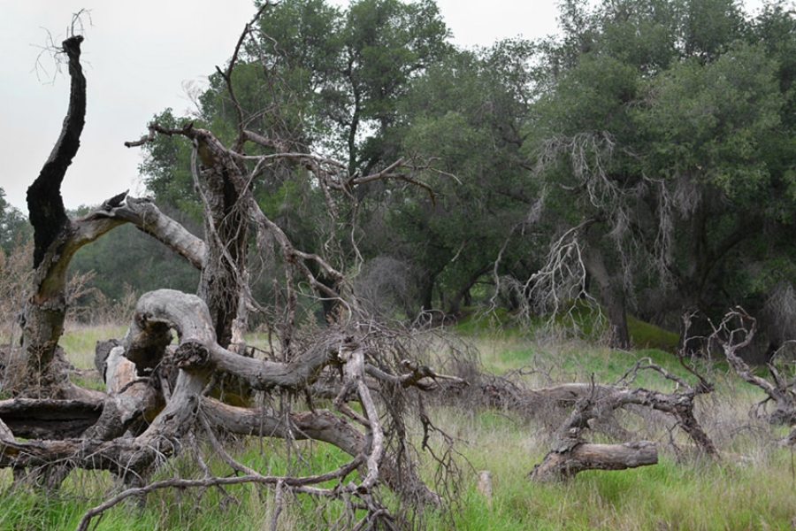 Placerita Canyon State Park
