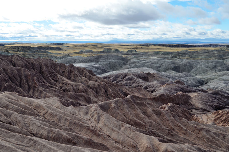 The Flattops Petrified Forest