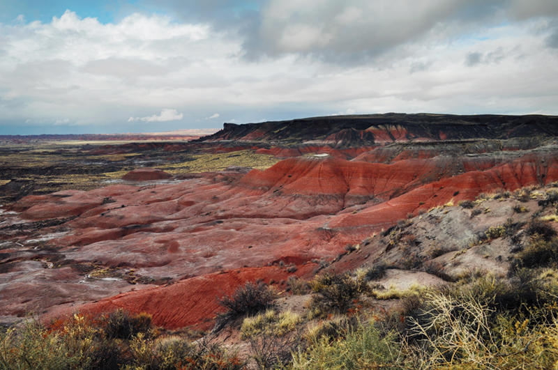 Lacey Point Painted Desert