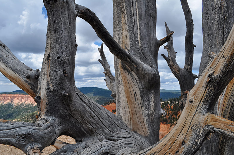 Bristlecone Loop Trail