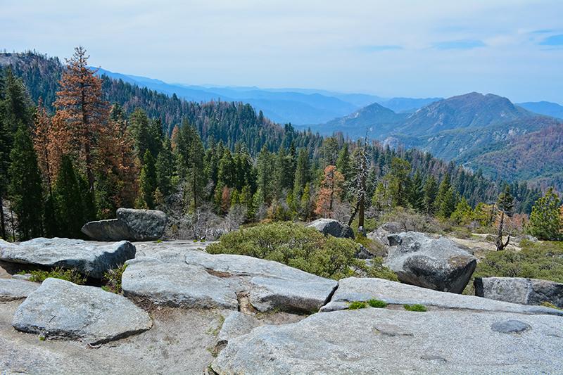 Beetle Rock Sequoia