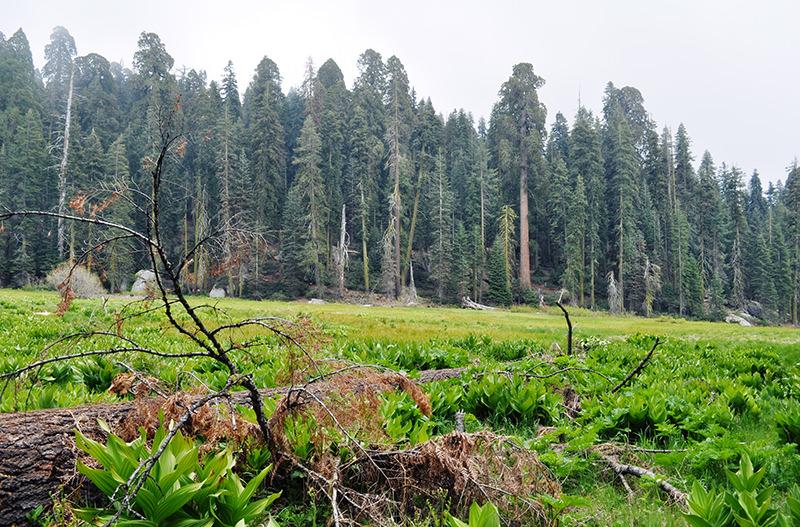 Log Meadow