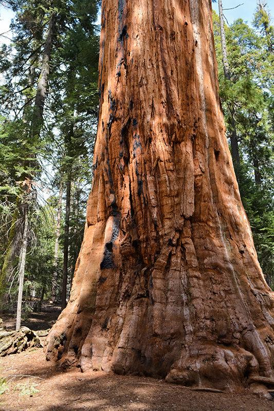 The President Sequoia