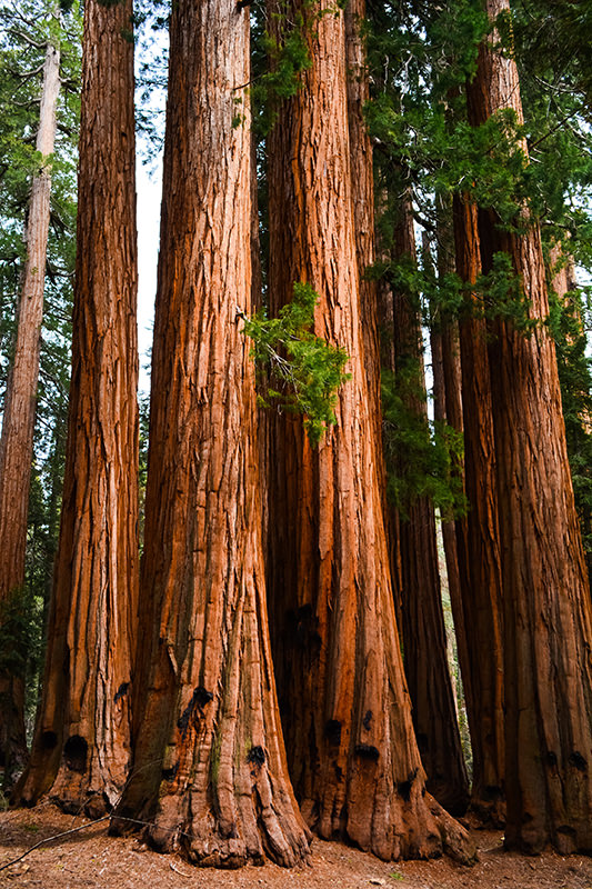 The House Sequoia