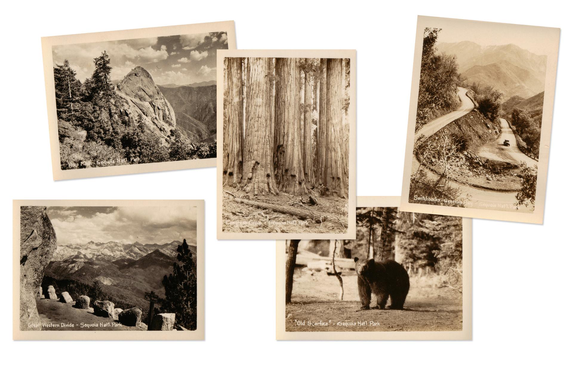 Sequoia National Park Antique Photographs