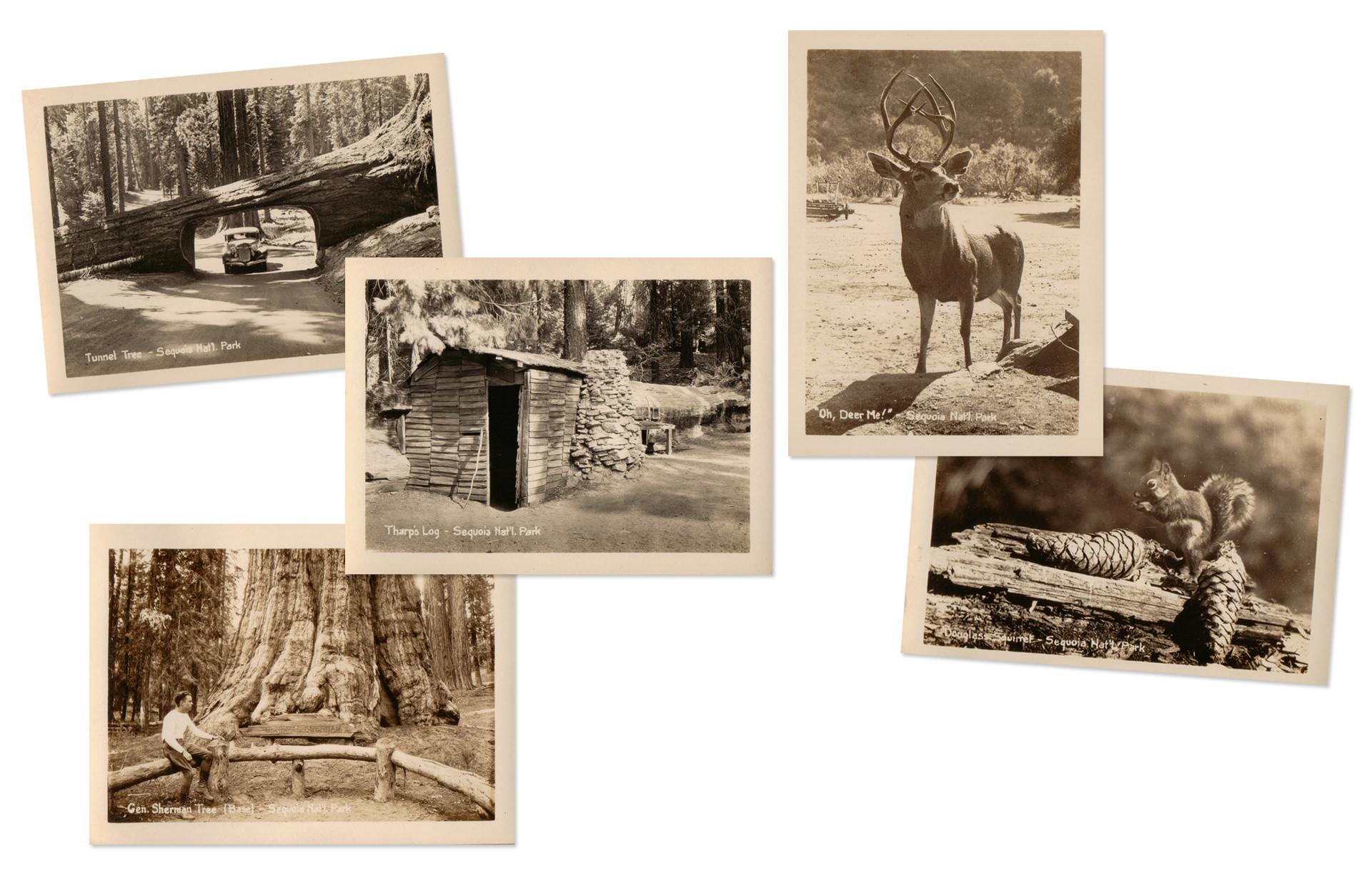 Sequoia National Park Vintage Photographs