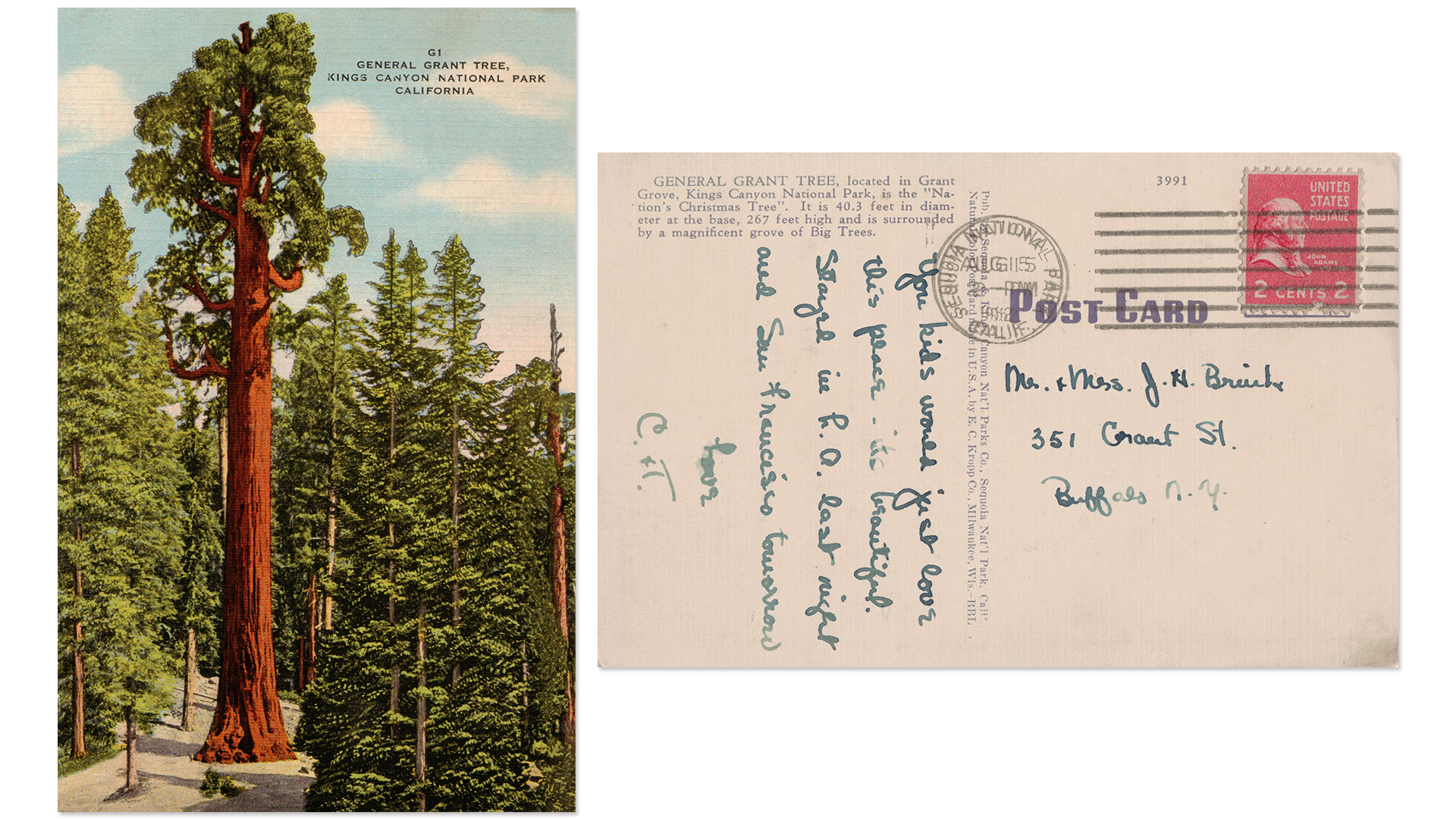 General Grant Tree Kings Canyon National Park Antique Postcard