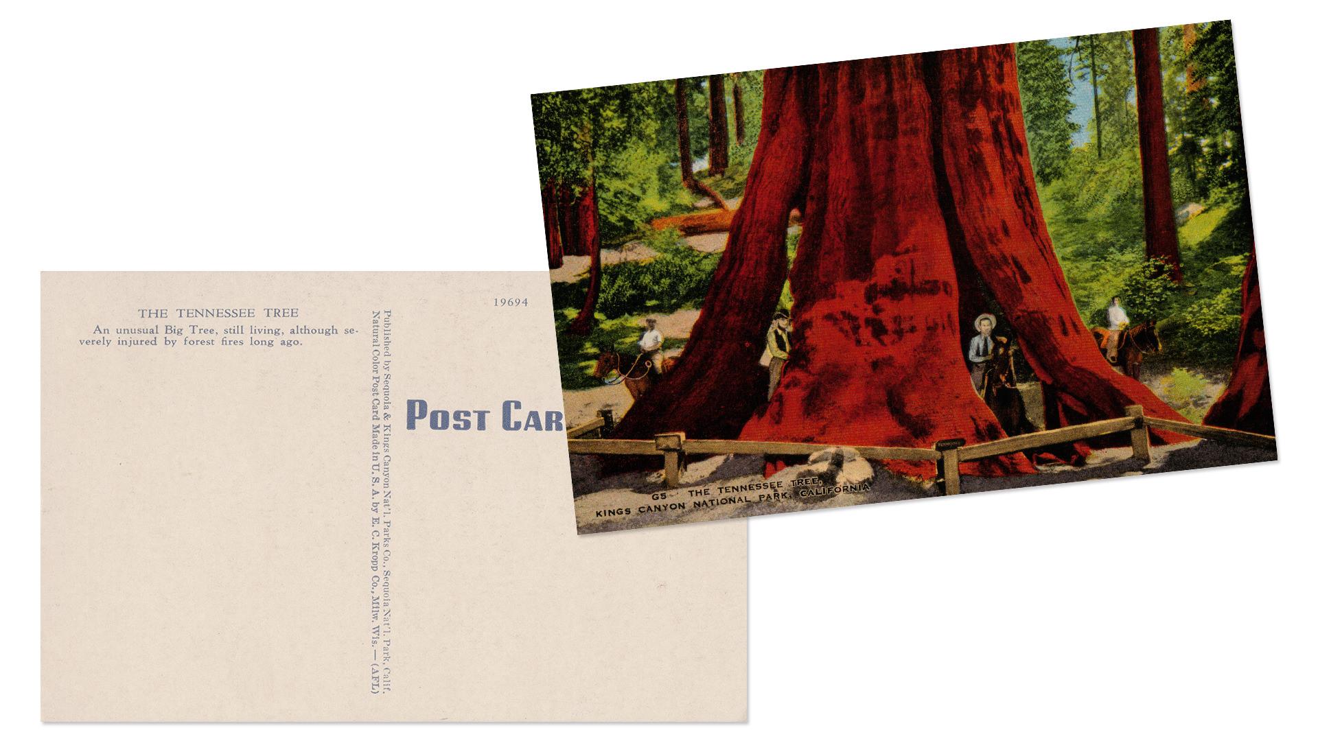 Kings Canyon National Park Antique Postcard