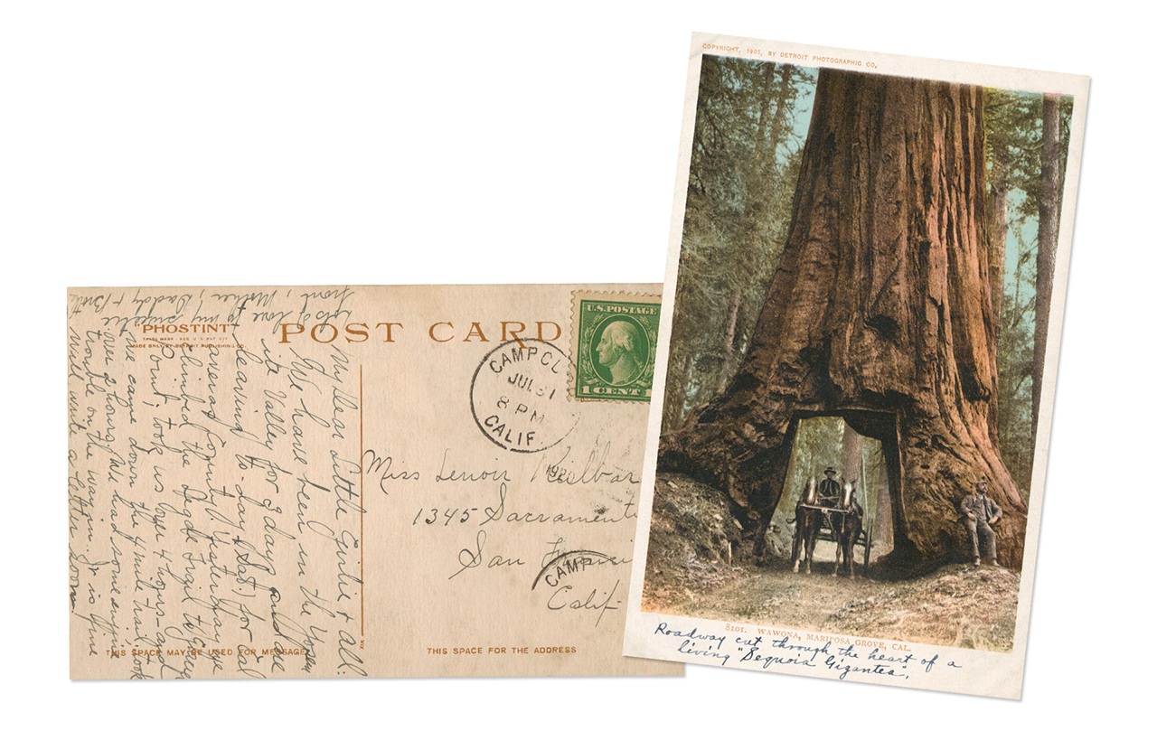 Yosemite National Park Mariposa Grove Antique Postcard
