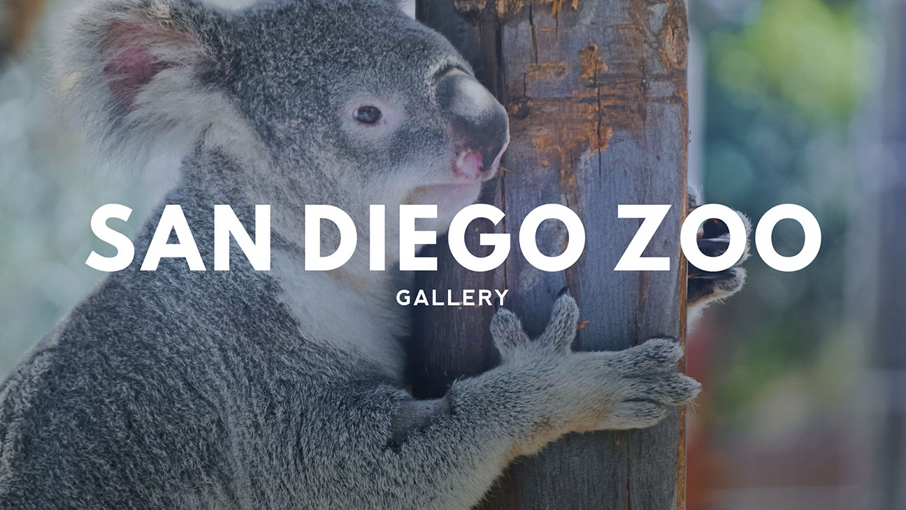 San Diego Zoo Photography Gallery