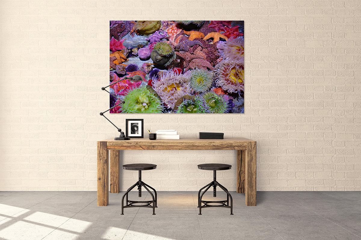 Pacific Ocean Reef Aquarium Fine Art Print