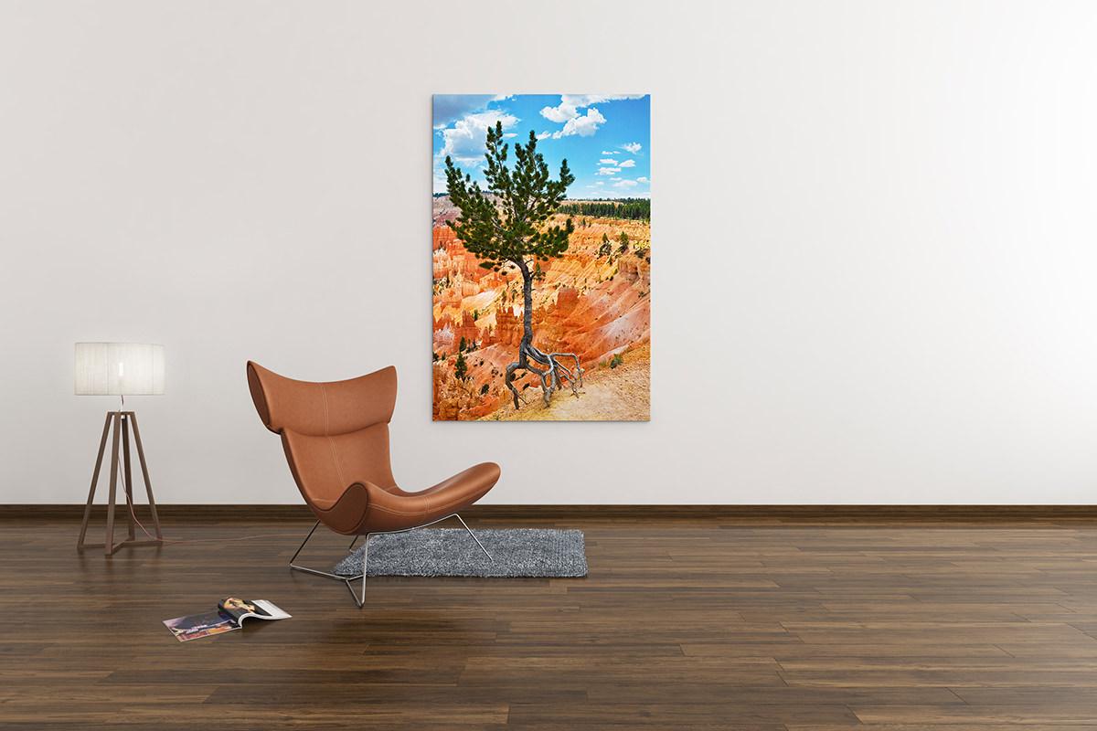 Bryce Canyon National Park Fine Art Print