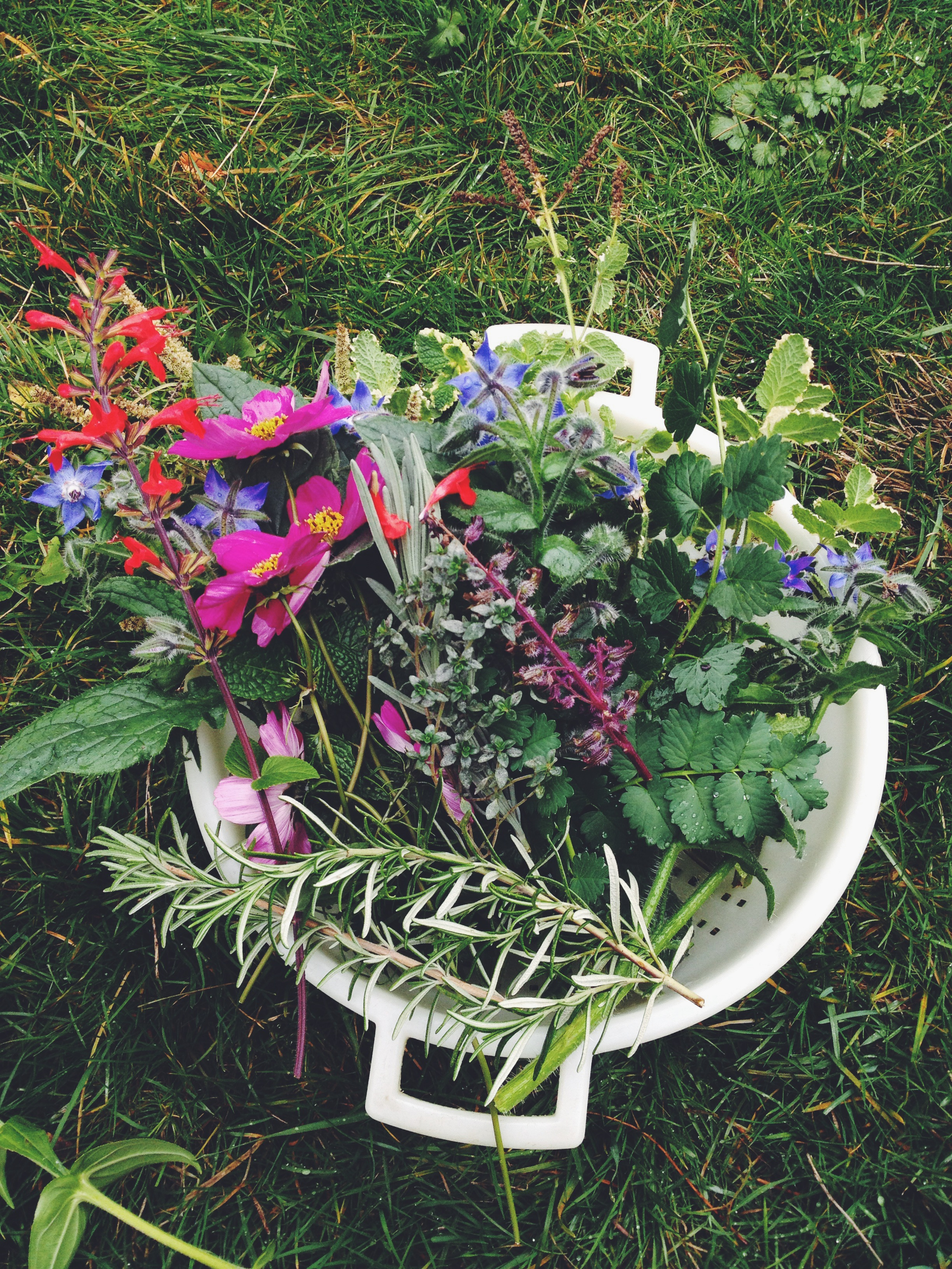 picking garnishes and a bouquet for Maven