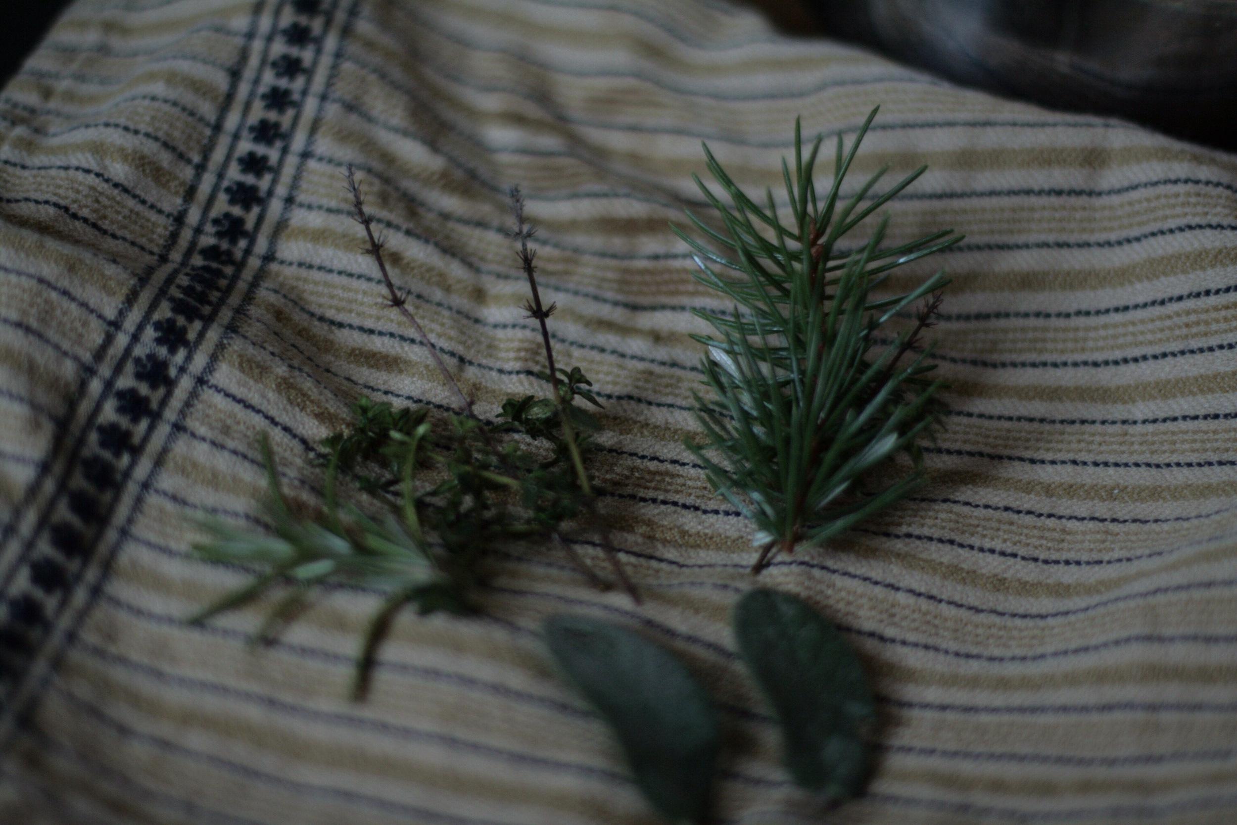 Rosemary, thyme, spruce, and sage