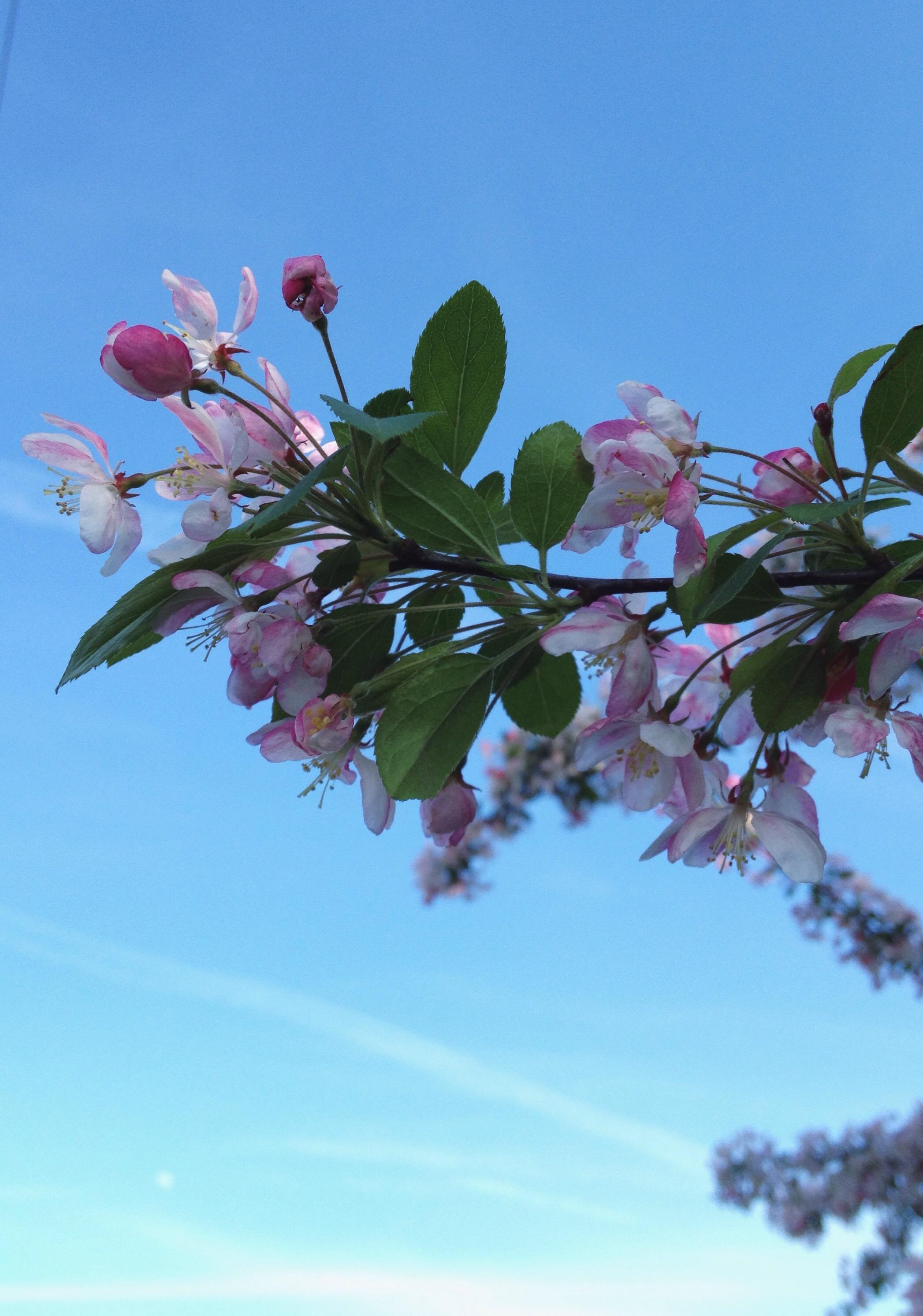 Blossoms and blue skies