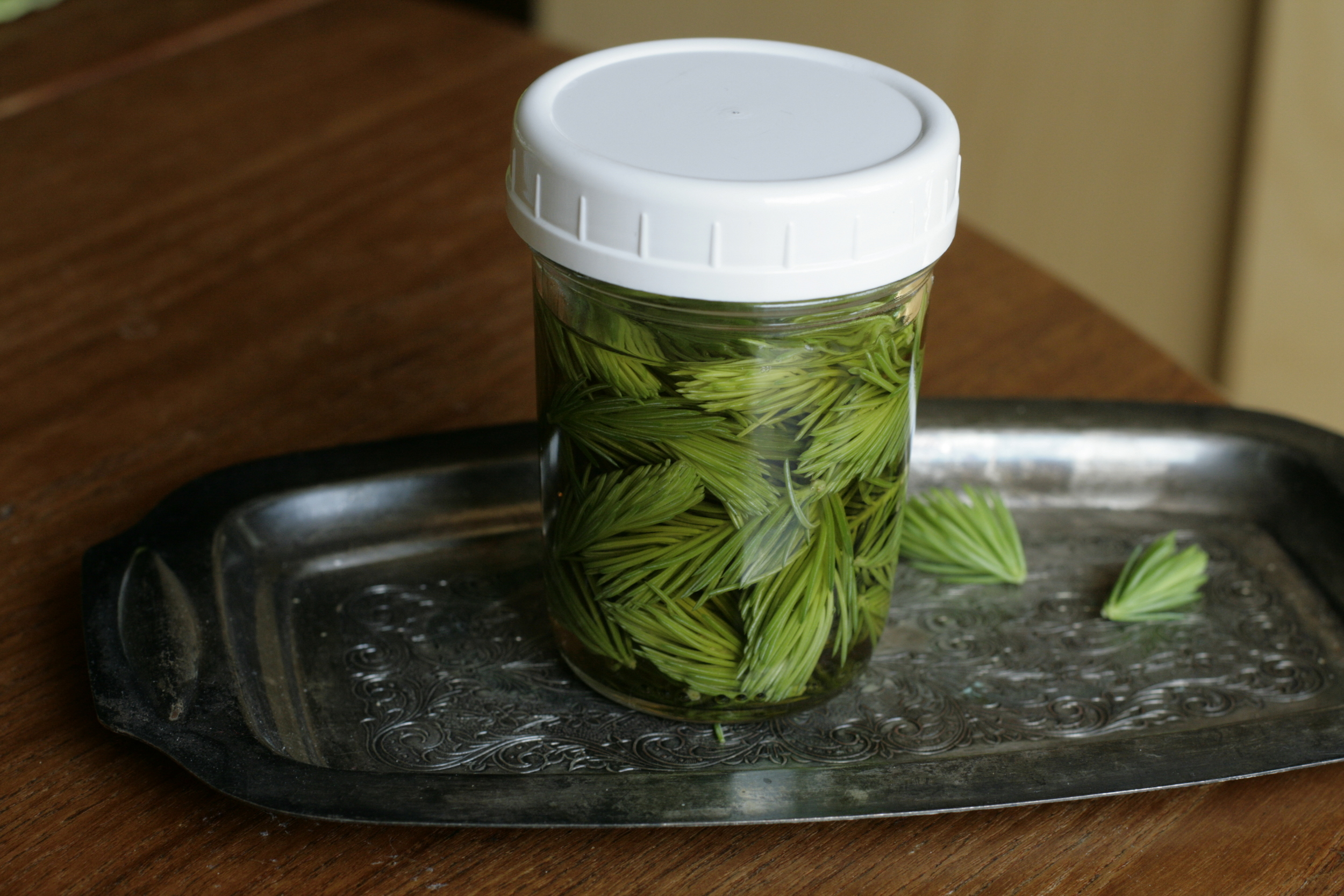 spruce tip infused apple cider - just let tips infuse in apple cider vinegar for a week or two