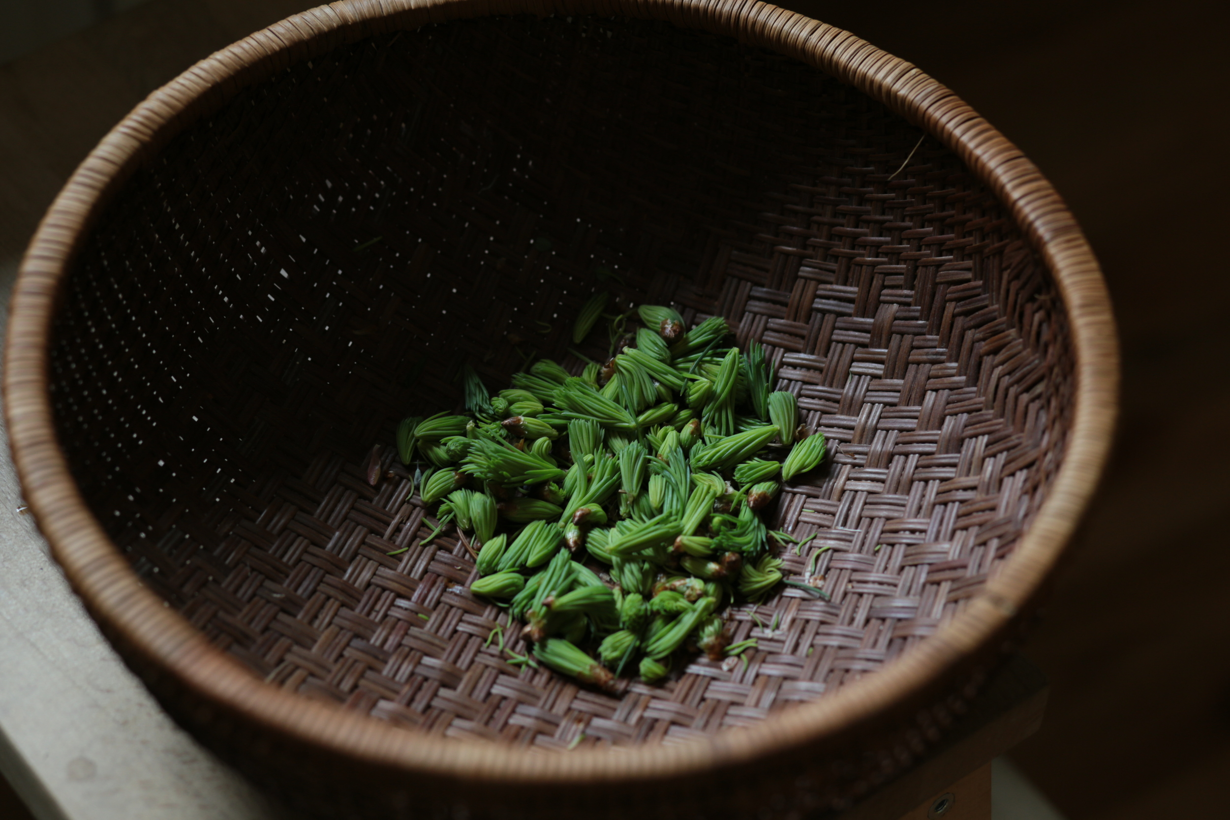 spruce tips basket.JPG