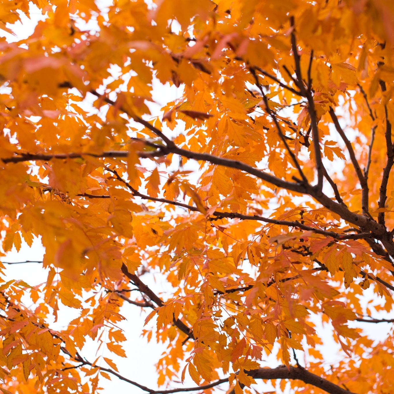fall - Weather can be a huge factor to selling your home in the fall.