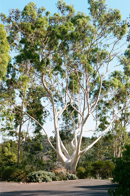 Mother Tree Meditation mountain