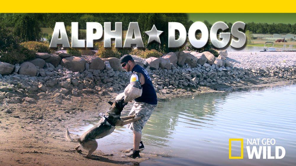 alphadogs.jpg