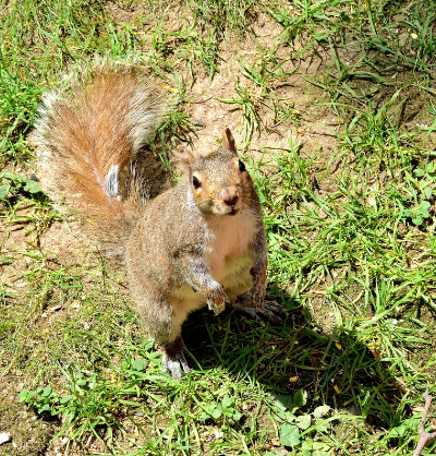 cutcaster-903383747-Squirrel-small.jpg