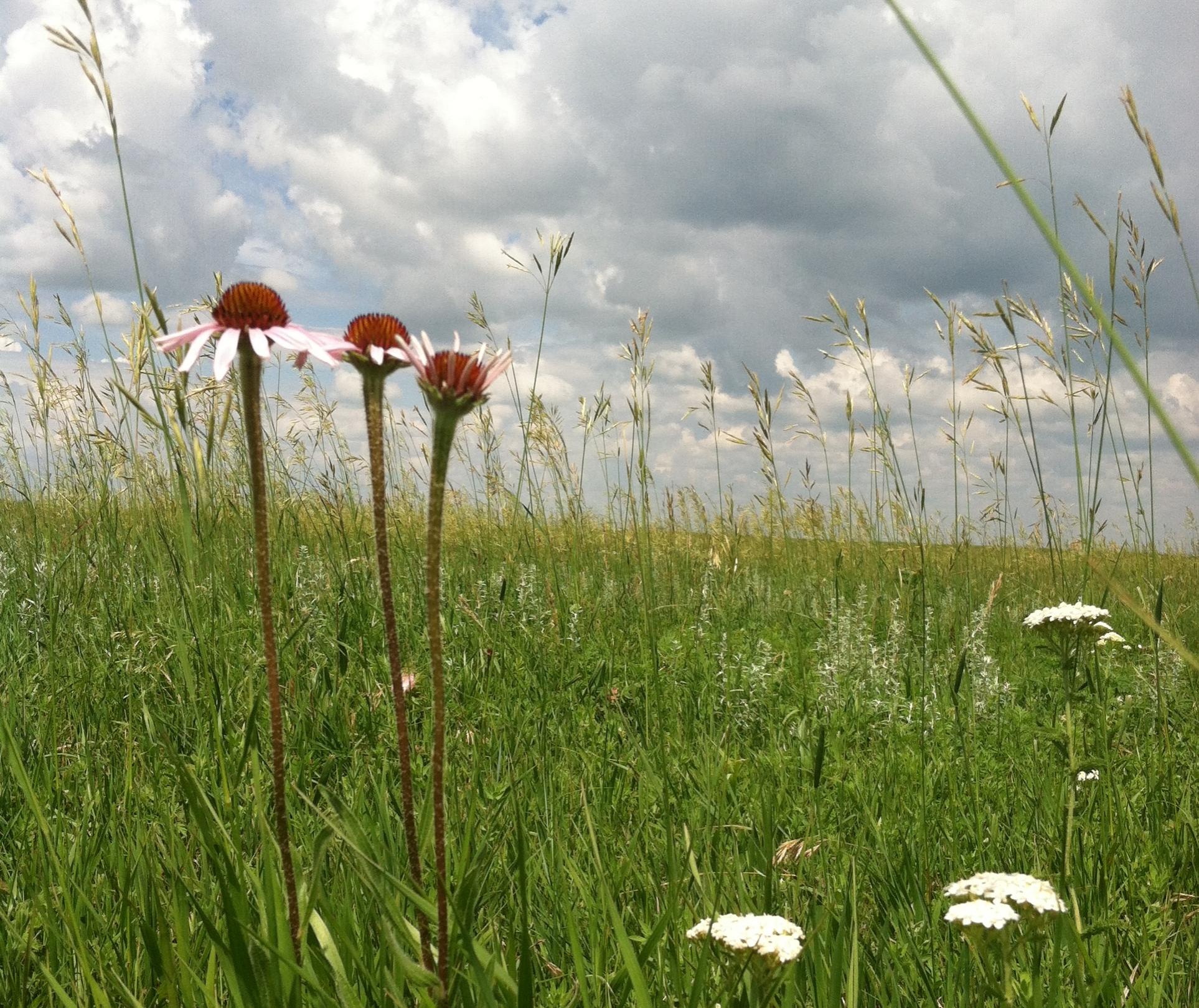 prairie is my garden.JPG