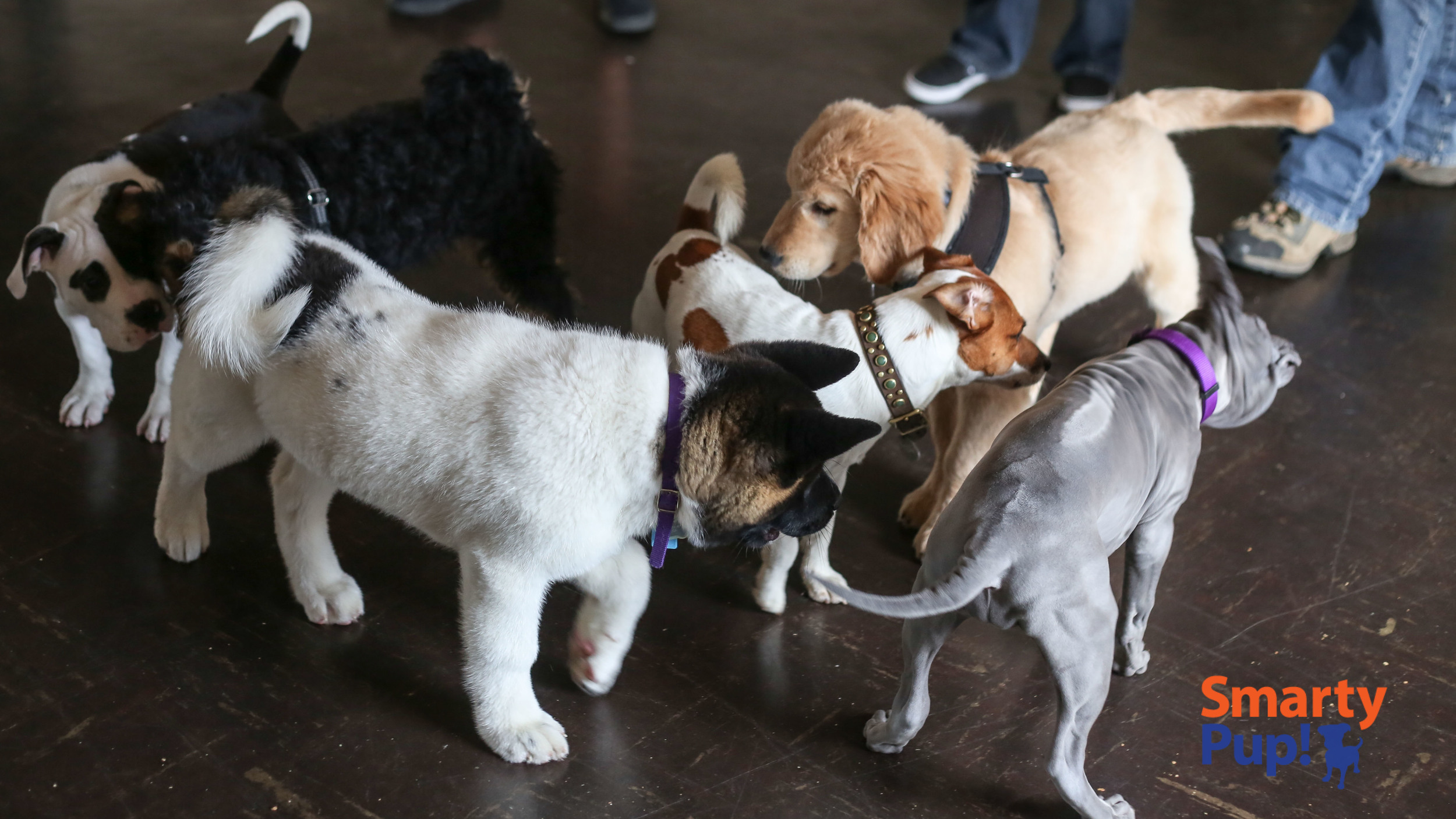 puppy-piles-2104-03-08-0976.jpg