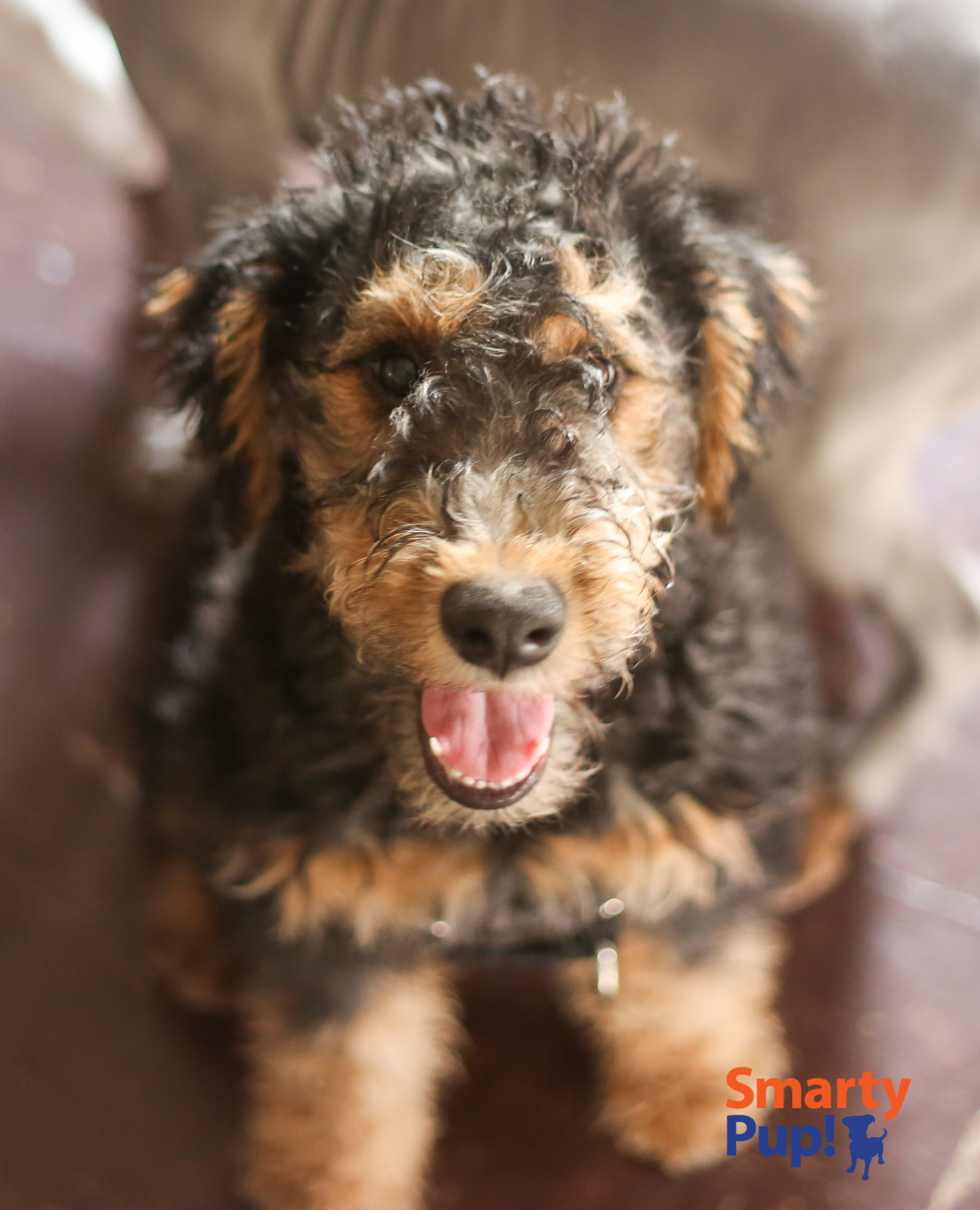 puppy-piles-2104-03-08-0991.jpg