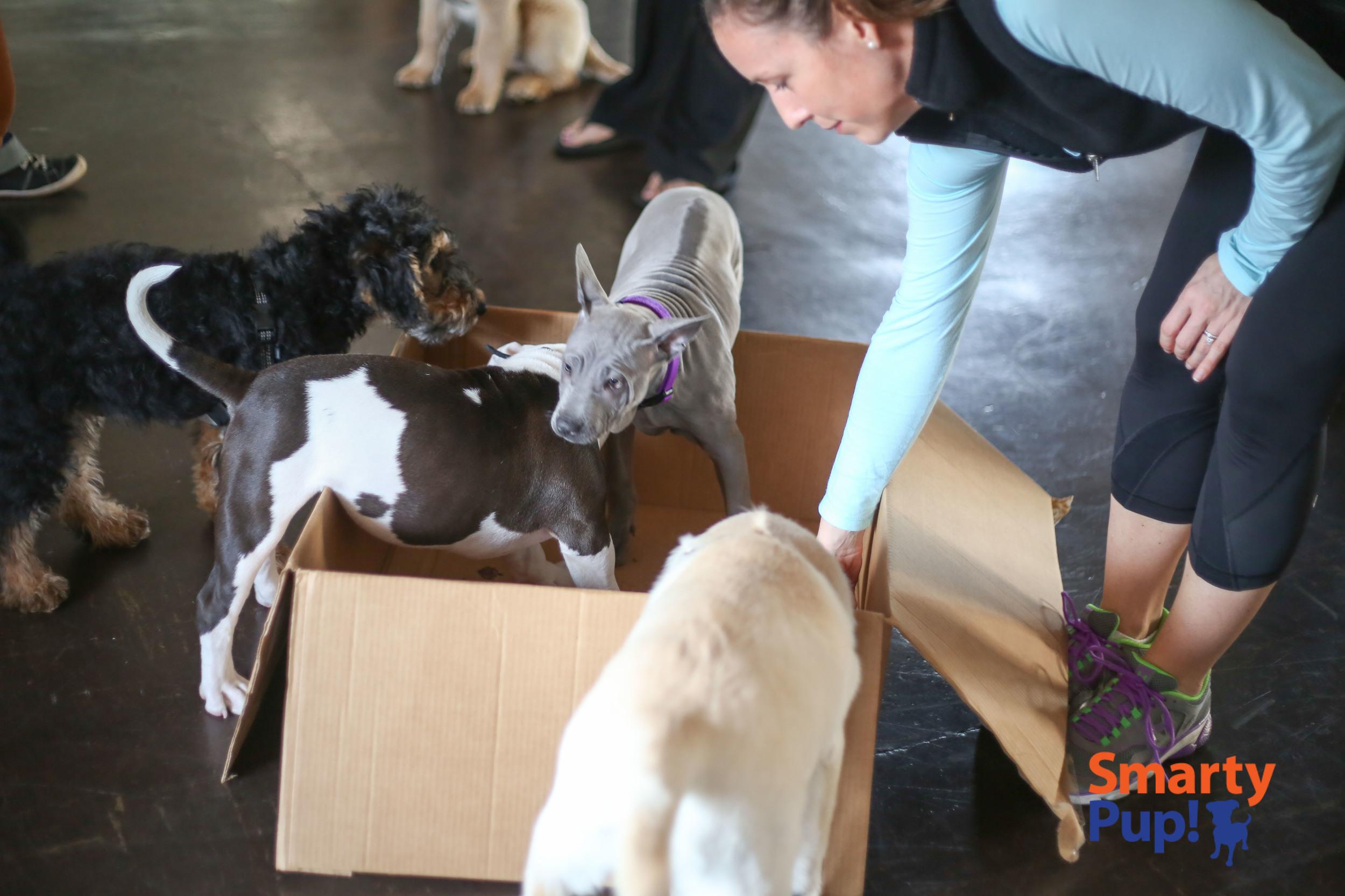 puppy-piles-2104-03-08-0966.jpg