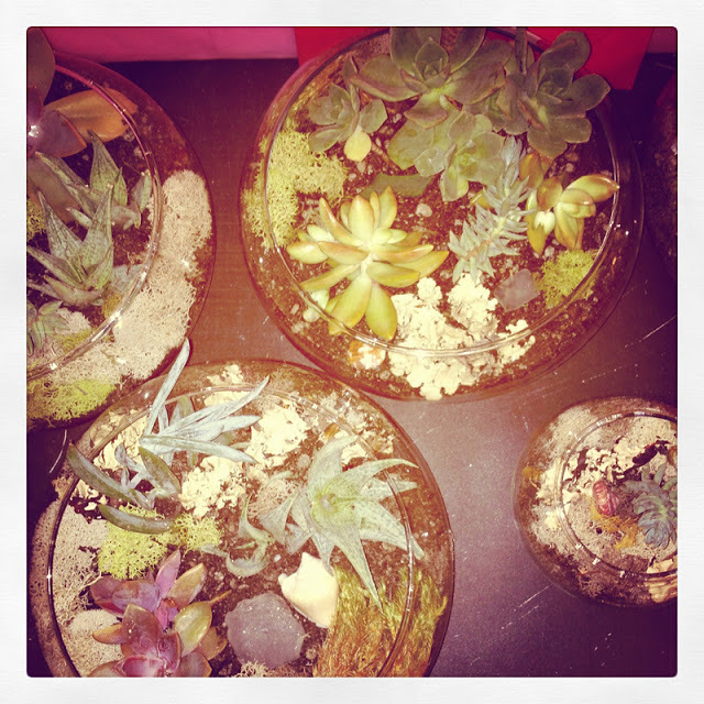 One of my Christmas gifts to my friends and family... I construced little succulent gardens, aren't they cute? So easy to make and so beautiful!