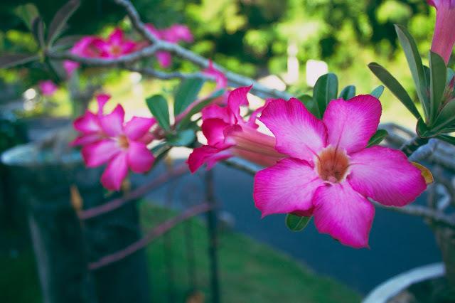 Beautiful flowers in Bali