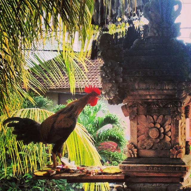 my alarm cock in Bali