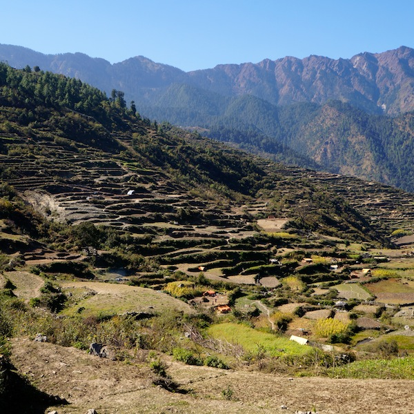 A view of the terraced rice fields in Gatlang