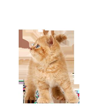 cat_PNG92.png