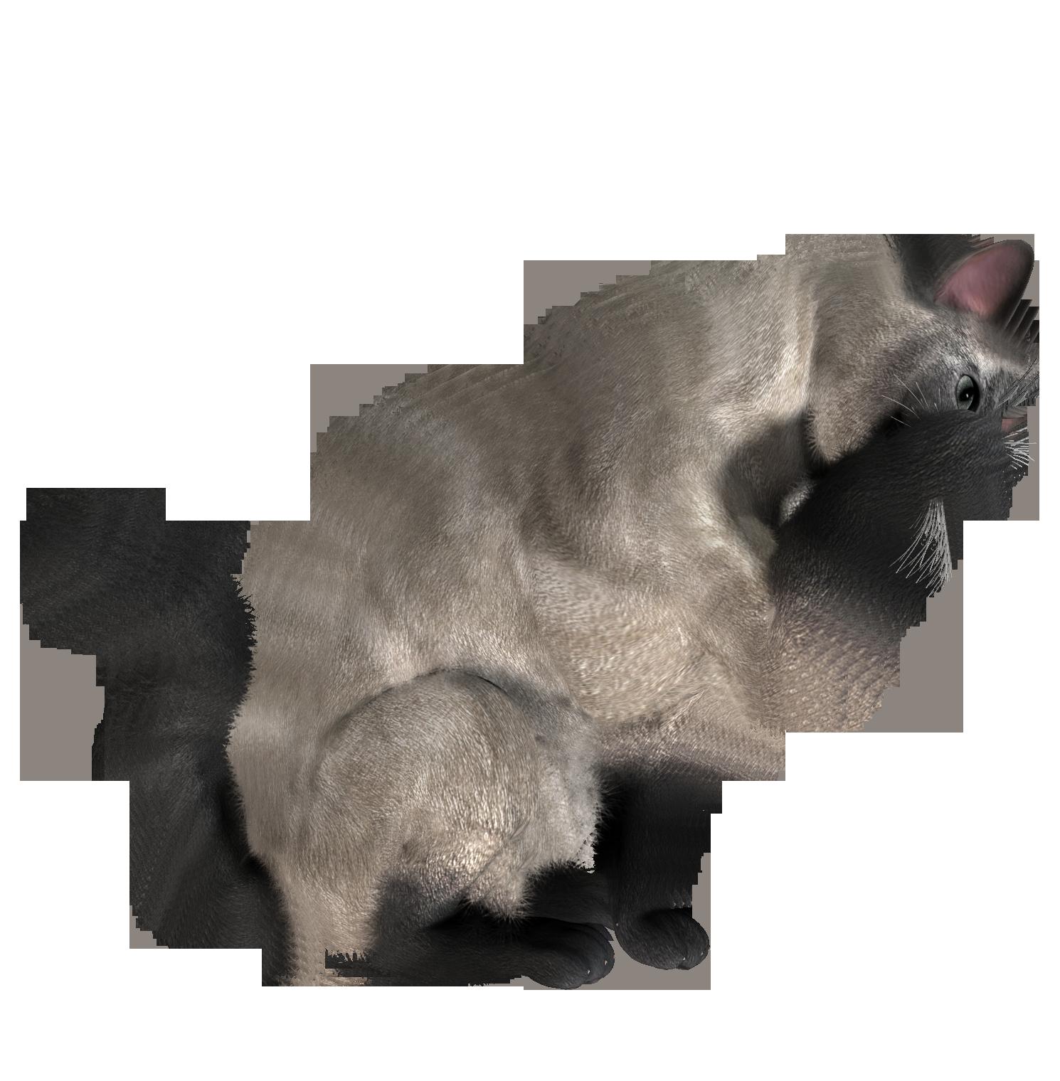 cat_PNG1634.png