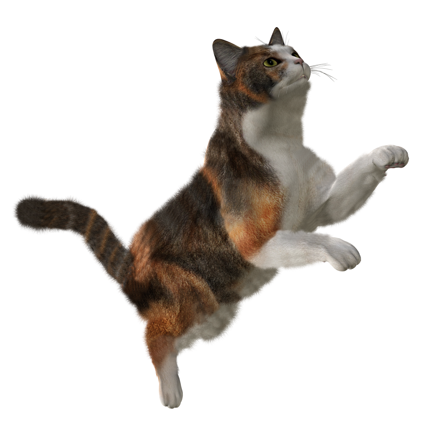 cat_PNG104.png