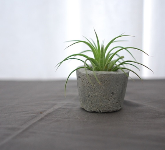 anson design company concrete planter