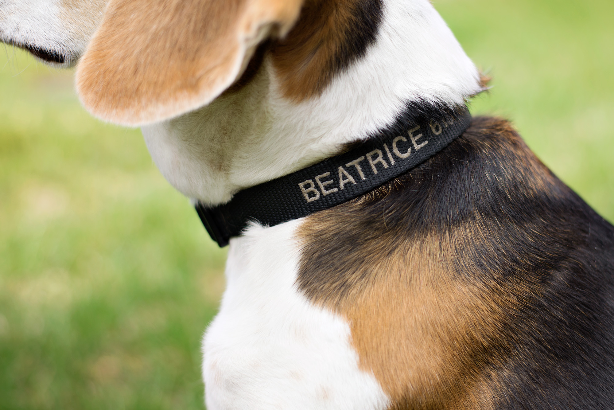 Beatrice_12.jpg