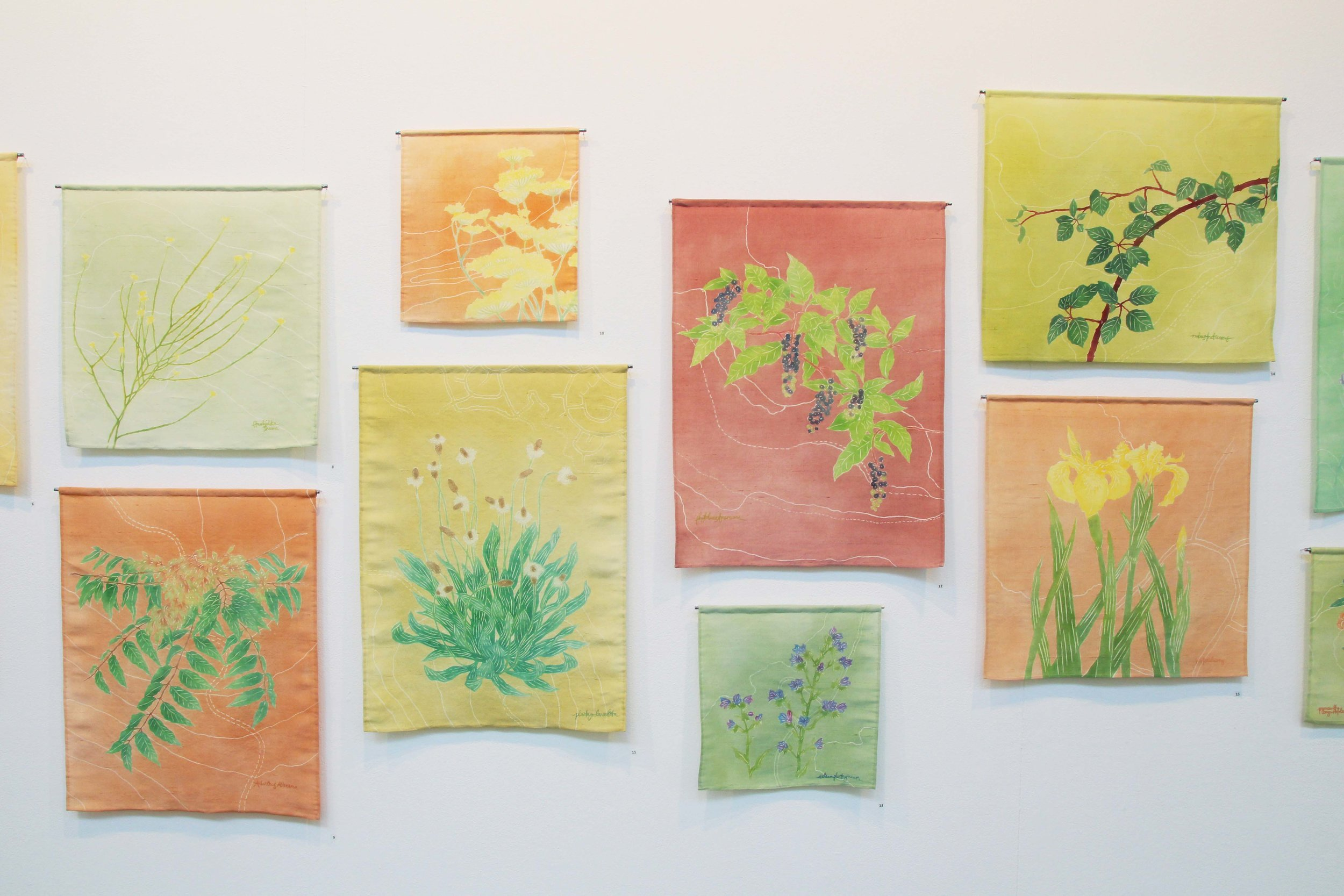 """'Beautiful Weeds of Canberra' 2017. On display at ANCA Gallery, Canberra for solo exhibition """"Naturescapes"""""""
