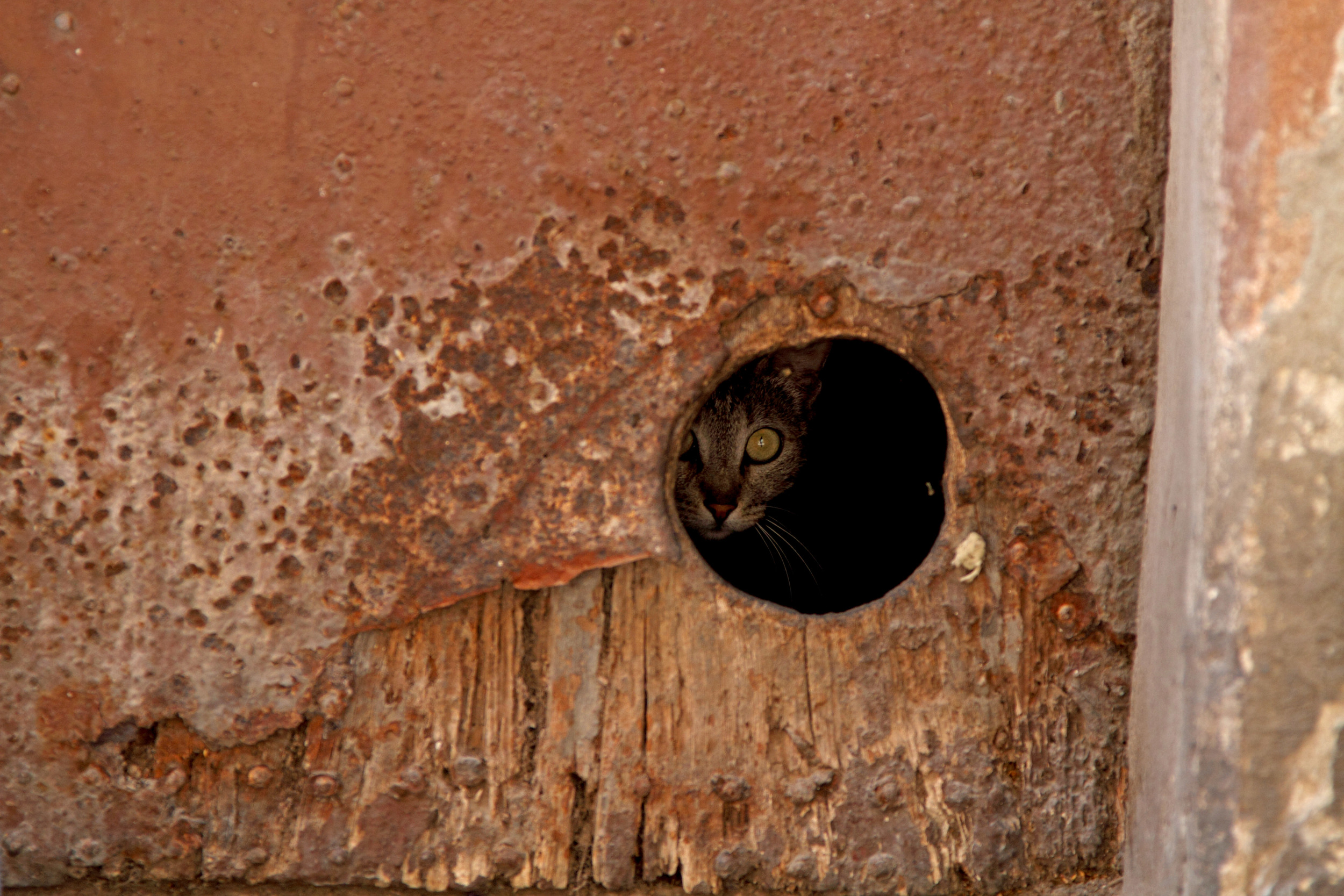 KITTY IN HOLE1_CC.jpg