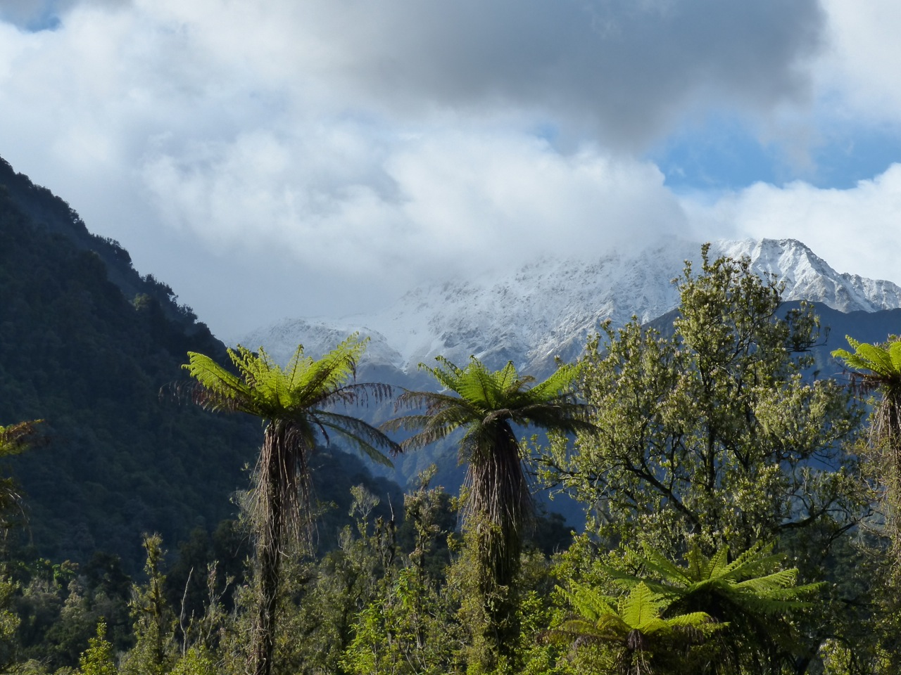 Scene outside my hotel room this morning at Franz Josef