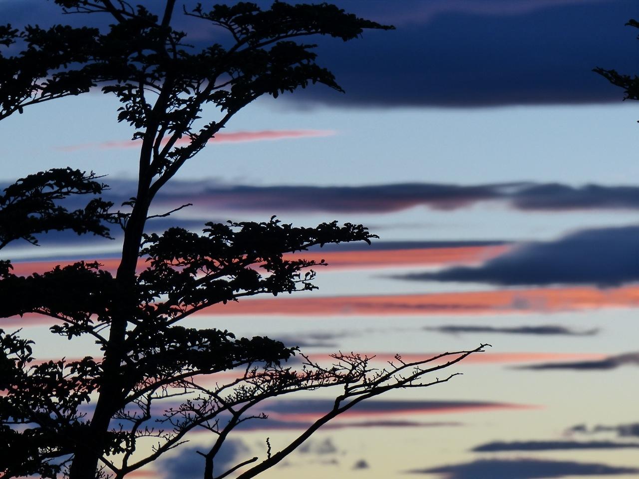 Tree and sky.jpg