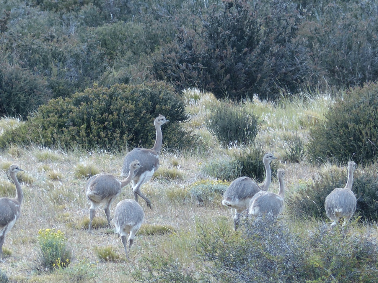 ostrich.jpg