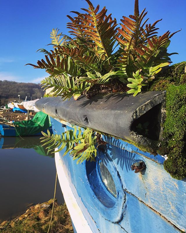 Boat Jardin respect.....#gogreen #sailinglife #sailaway #boatyard #beachbum #gardening #bush #growth #porthole #yachtingworld #vegan #hellas #plymouth #stgermans #welivetoexplore #forgottenplaces #abandonedplaces #thegearoutdoors #uk #soulstepper
