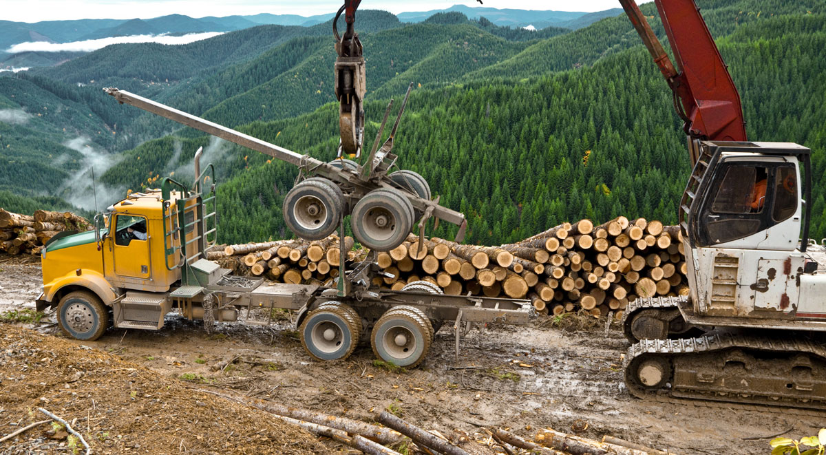 timber-oregon-yard-shutterstock_155830577-cropped.jpg