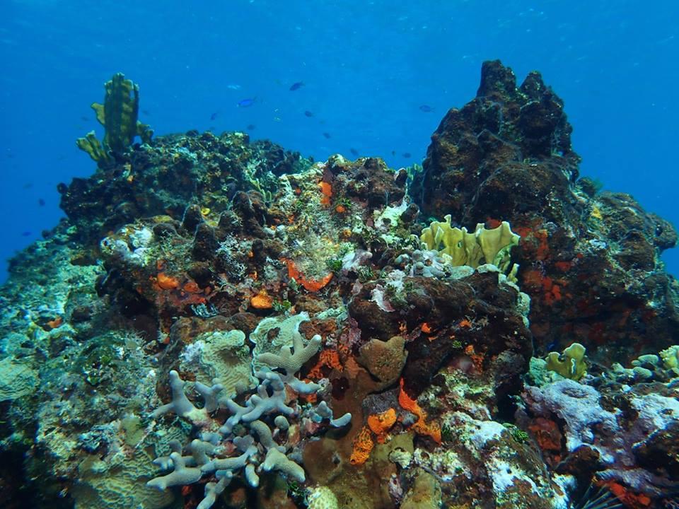 corals2.jpg