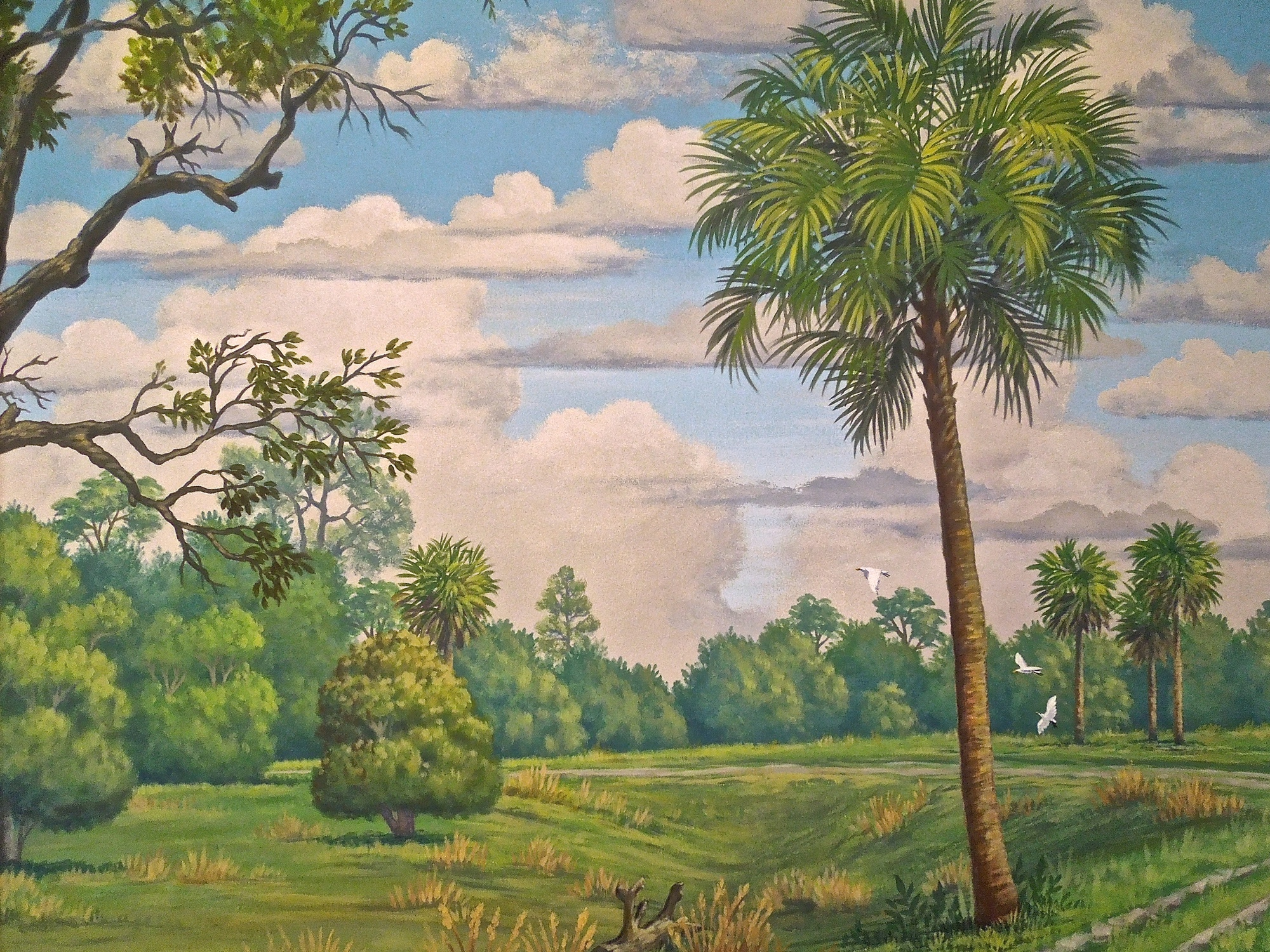 Florida Ranch, Cabbage Palm